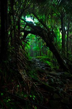 """Heart of the Jungle"" An image taken deep within the El Yunque rainforest. Puerto Rico"