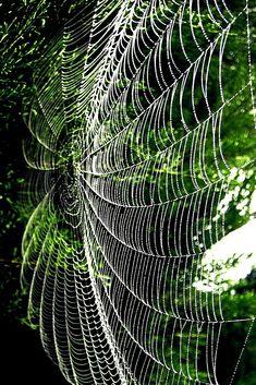 mistymorningme:  Spiderweb©d-a-r-e-k
