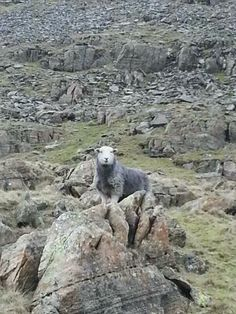 """""""You shall not pass""""  territorial herdy at White Pike."""