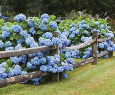 10 Rewarding Hacks: Fence Design With Plants zig zag split rail fence.White Privacy Fence old cedar fence. Fence Landscaping, Backyard Fences, Garden Fencing, Fence Design, Garden Design, Walpole Outdoors, Country Fences, Rustic Fence, Rustic Wood