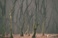 Speulder Revisited by Lars van de Goor on 500px...Speulderbos Veluwe...