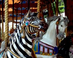 Zebra on the Carousel, 8x10 Photo Print by Tealcheesecake on Etsy, $18.00