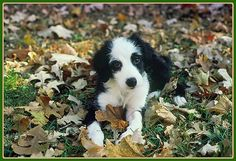 """A re-posting on my pup """"Bandit"""" - sweet loving memory is she.   Honestly Delightful"""