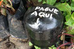 Estande vende plantas e recebe dinheiro através de cofrinho em Florianópolis Salvador Gomes/Especial