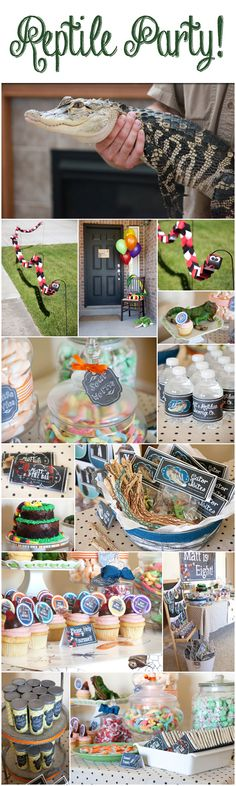 Reptile party decorations and ideas from Melinda Bryant Party Boutique on Etsy.  Click on the photo to shop for these fun products.   //   reptile birthday, boys birthday party ideas, girls birthday party ideas, party supplies, party decorations, #melindabryantphoto #reptileparty
