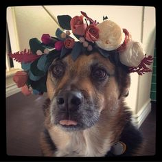 My baby girl wearing a crown of paper flowers my girlfriend made.   Animals    #dog