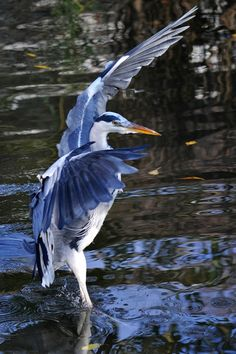 Wings of a Heron