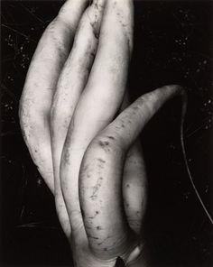 Edward Weston, (my all time favorite photographer) White Radish. History Of Photography, Modern Photography, Abstract Photography, Artistic Photography, Video Photography, Edward Weston, Henry Westons, Straight Photography, Tina Modotti