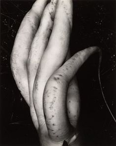 Edward Weston, (my all time favorite photographer) White Radish.