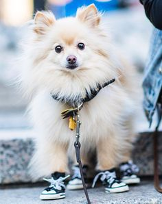 BEST SNEAKERS - New York City's Best-Dressed Dogs of the Year