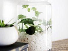 jardin-aquatique-mini-interieur-pour-plantes