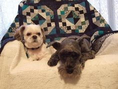 "What is ""Pets on Quilts""?  It starts tomorrow - August 1st.http://marciascraftysewing.blogspot.com/2012/07/what-is-pets-on-quilts.html"