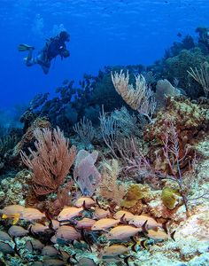 Scuba diving in Cozumel. Pictures can't do this place justice,you have to be there to see how beautiful it really is!
