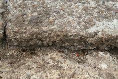 Myrebekæmpelse - tips til bekæmpelse af myrer Tips, Food, Essen, Meals, Yemek, Eten, Counseling