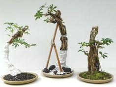Gardening Tips To Avoid Fungus During Summer Succulent Bonsai, Bonsai Plants, Bonsai Garden, Bonsai Trees, Succulents, Acer Palmatum, Wisteria Bonsai, Japanese Bonsai Tree, Tree Branch Decor