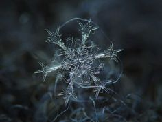 Amazing macro-photography of individual snowflakes Pictures] - Nature Knows Snowflake Photography, Macro Photography Tips, Micro Photography, Close Up Photography, Beauty Photography, Photography Flowers, Photography Tutorials, Creative Photography, Fotografia Macro