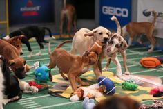 Forget the Broncos and the Seahawks: Animal Planet's tenth annual Puppy Bowl gets ready to kick off with 66 adorable pups. Check out this year's all-star lineup.