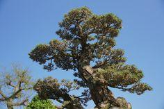 아름드리 나무 - Google 검색