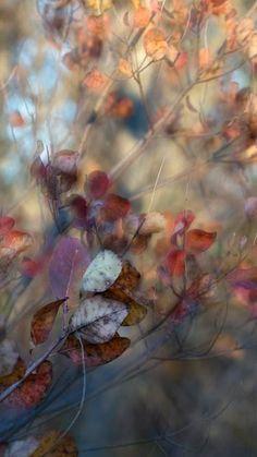 nature # 12 - Limited Edition of 1 Photograph Whatsapp Background, Buy Art, Paper Art, Saatchi Art, Nature Photography, Original Art, Fine Art, The Originals, Fall