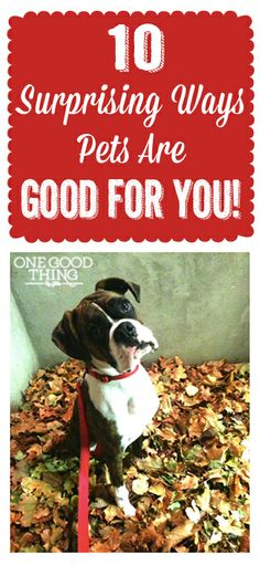 If you love your pet like WE do...you won't be able to resist this post & giveaway. :-)
