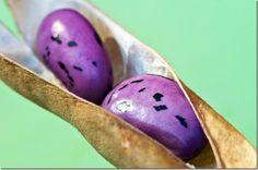 runner bean seeds in open pod copy