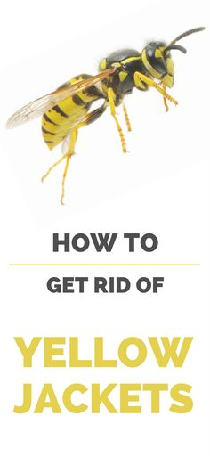 How To Get Rid Of Yellow Jackets Topcleaningtips Com Yellow Jacket Getting Rid Of Bees Yellow Jacket Trap