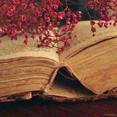 Spray of flowers with old book