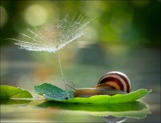 The Most Amazing Up-Close Snail Photos You'll Ever See - Science And Nature Animals And Pets, Cute Animals, Magical Pictures, Fotografia Macro, Tiny World, Mundo Animal, Tier Fotos, Fauna, Macro Photography