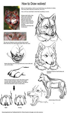 Some Tips, Tricks, And Techniques For The Perfect drawing tutorial Furry Drawing, Manga Drawing, Drawing Sketches, Drawing Art, Drawing Tips, Animal Sketches, Animal Drawings, Art Drawings, Wolf Drawings