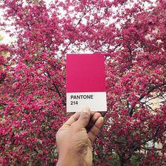 Pantone Project: Colori Pantone nella Vita Reale di Paul Octavious PANTONE 214