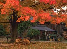 Maple Tree in Autumn, Credit: Bob Hallock. #Autumn #Fall #Massachusetts #Travel