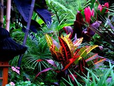 Love the black elephant ears with the vibrant pink and orange foliage Beautiful! Love the black elephant ears with the vibrant pink and orange foliage Tropical Garden Design, Tropical Landscaping, Colorful Garden, Garden Landscaping, Landscaping Ideas, Patio Ideas, Backyard Ideas, Florida Landscaping, Balinese Garden