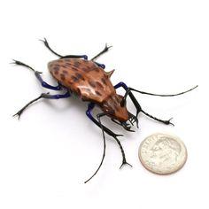 Goldstone Jewel Tiger Beetle - realistic aventurine lampwork glass insect beetle figurine glass artist Wesley Fleming. https://www.etsy.com/shop/vetropod?ref=l2-shop-header-avatar
