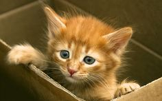 If a new addition in the form of kitten has just arrived in your home, then getting a list of good boy or girl cat names to choose from is top of the list. I Love Cats, Cool Cats, Kittens Cutest, Cats And Kittens, Funny Kittens, Girl Cat Names, Pet Names, Baby Animals, Cute Animals