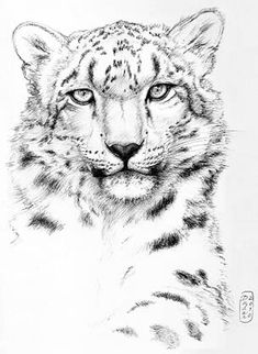 Snow Leopard by Vanishing Kingdoms Big Cats Art, Cat Art, Animal Sketches, Animal Drawings, Leopard Tattoos, Snow Leopard Tattoo, Snow Leopard Drawing, Mandala Art, Pop Art Wallpaper