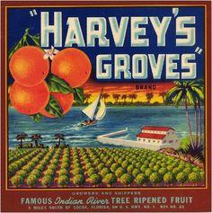 Cocoa Florida Harvey's Groves Orange Citrus Fruit Crate Label Art Print   eBay