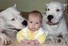 2 bodyguards, dogo argentino