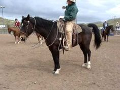 Buck Brannaman:  Day 1: BB On Collection vs Soft Feel; Classical Horsemanship; Focus: 3 Elements of Lateral Flexion which has never been taught before by anyone! Some Tried! Ray and Tom knew: but Buck found a new way to present it which is amazing