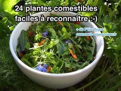 24 Plantes Comestibles Faciles à Reconnaître.
