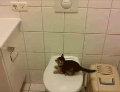 Kitten-Jumping-Off-Toilet-Fail