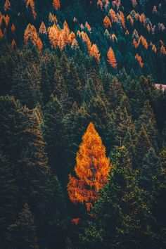 50+ Stunning Fall Wallpaper For Your iPhone! - Prada & Pearls