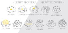 Peony Flower Shapes