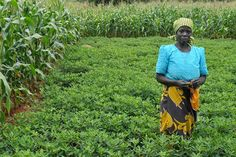 Malawian farmer in her groundnut plot under conservation agriculture. Photo @ CIMMYT/Flickr through a Creative Commons license.//A call for inclusive conservation