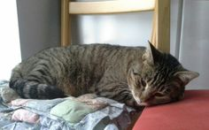 Come dorme bene ilmorbido Clyde!