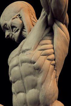 ... | anatomy refere...@claned采集到人體(378图)_花瓣游戏
