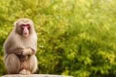 Miriam Mylene's reisblog: Uit in Nederland: Dierenpark Amersfoort