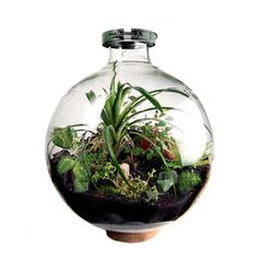 One of a kind bio-dome by Mac Nettles