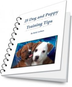 25 Dog and Puppy Training Tips // how train your dog for calm greetings with other dogs Dog Clicker Training, Puppy Training Tips, Training Your Dog, Training Videos, Training Schedule, Crate Training, Potty Training, New Puppy, Puppy Love