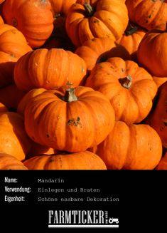 Soo hübsch! Auch der Mandarin eignet sich zum Backen, Einlegen oder Braten. Aber auch als Deko macht er sich wunderbar auf dem Sideboard oder Fensterbrett.  Weitere Infos zu allen möglichen Kürbissorten findest du im Link! Pumpkin, Vegetables, Link, Food, Window Sill, Carving Pumpkins, Mandarin Oranges, Pickling, Popular