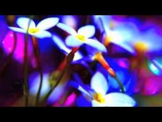 ▶ Guided Meditation to Release Anger - YouTube